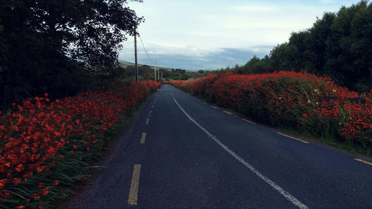 Велосипедный заезд. Dingle peninsula
